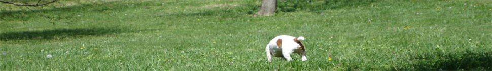 thegreglowe.com header image 2